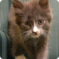 Adopt A Pet :: Max - Columbus, NE
