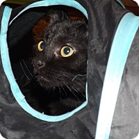 Adopt A Pet :: Hector - Morganton, NC