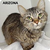 Adopt A Pet :: Arizona-outgoing! - Lapeer, MI
