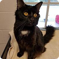 Adopt A Pet :: Tanner - Umatilla, FL