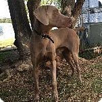 Adopt A Pet :: Casper - Fayetteville, AR