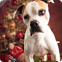 Boxer Mix Dog for adoption in Ottawa, Kansas - April