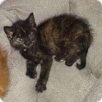 Adopt A Pet :: Aimee - Winston-Salem, NC