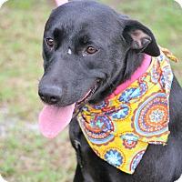 Adopt A Pet :: Trelly - Hazlehurst, GA
