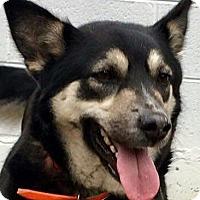 Adopt A Pet :: Nakita - Staunton, VA