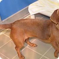 Adopt A Pet :: Cherish - Humble, TX