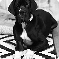 Adopt A Pet :: Jarvis - Newport, KY
