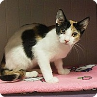 Adopt A Pet :: Fergie - Ocean City, NJ