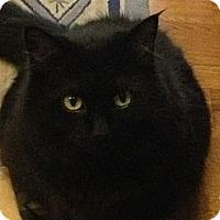 Adopt A Pet :: *Nisha - Winder, GA