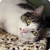 Adopt A Pet :: Alida - Chicago, IL