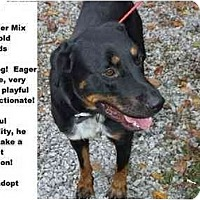 Adopt A Pet :: # 622-09 - ADOPTED! - Zanesville, OH