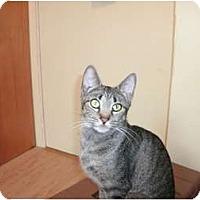 Adopt A Pet :: Minnie - Clay, NY