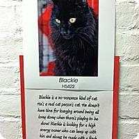 Adopt A Pet :: Blacky - Whitestone, NY