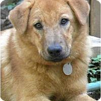 Adopt A Pet :: GILDA - Hagerstown, MD