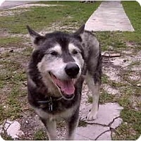 Adopt A Pet :: Kaya - Belleville, MI