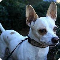 Adopt A Pet :: Oliver - Justin, TX