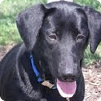 Adopt A Pet :: Dolly - Lewisville, IN