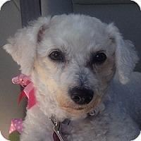 Adopt A Pet :: Libby - La Costa, CA