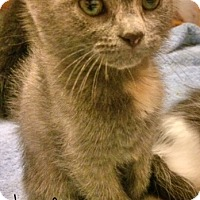 Adopt A Pet :: Chip is a CUTE tiny stinker! - McDonough, GA