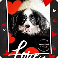 Adopt A Pet :: Jordan - Shawnee Mission, KS