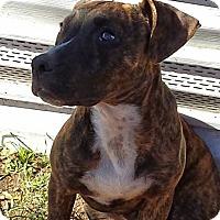 Adopt A Pet :: Outlaw - Buchanan Dam, TX