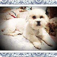 Adopt A Pet :: Pending!!Jingles - S. TX - Tulsa, OK