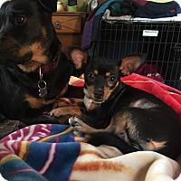 Adopt A Pet :: Winifred - San Francisco, CA