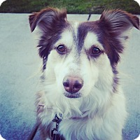 Adopt A Pet :: TRIXIE (Courtesy List) - San Pedro, CA