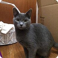 Adopt A Pet :: Lucien - Acushnet, MA