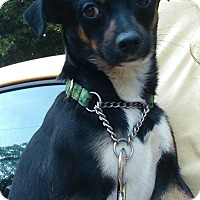 Adopt A Pet :: cella - Lebanon, CT
