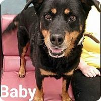 Adopt A Pet :: Baby - Ottumwa, IA