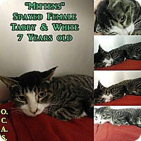 Domestic Shorthair Cat for adoption in Triadelphia, West Virginia - T-3 Mittens