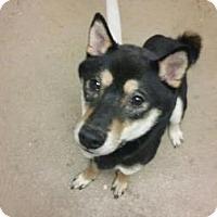 Adopt A Pet :: Gunner - Menands, NY