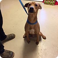Adopt A Pet :: Buddy - Media, PA