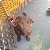 Adopt A Pet :: Hershey - Old Bridge, NJ