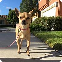 Adopt A Pet :: Emma - San Pedro, CA