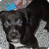 Adopt A Pet :: Inky - Washington, PA