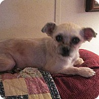 Adopt A Pet :: ANGEL - Sardis, TN