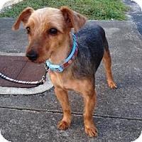 Adopt A Pet :: Jett - Bunnell, FL