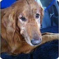 Adopt A Pet :: Holden - Foster, RI