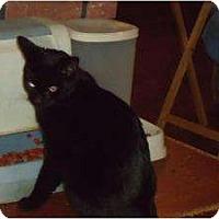 Adopt A Pet :: Lacey - Riverside, RI