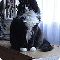 Adopt A Pet :: Flo - Mission, BC