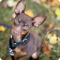 Adopt A Pet :: Ayden - Myersville, MD