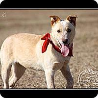 Adopt A Pet :: Ki - Flowery Branch, GA