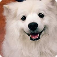 Adopt A Pet :: Finn - Phoenix, AZ