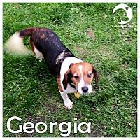 Adopt A Pet :: Georgia - Novi, MI