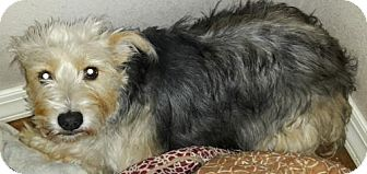 Terrier (Unknown Type, Medium) Mix Dog for adoption in Wagoner, Oklahoma - Hannah
