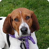 Adopt A Pet :: Walter - San Francisco, CA