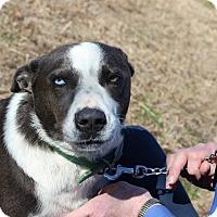 Adopt A Pet :: Zeuss - Brattleboro, VT