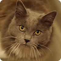 Adopt A Pet :: Baby - DFW Metroplex, TX